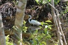 One of Floridas many beautiful birds