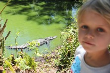 Watching aligators is not so magic, but pretty fascinating
