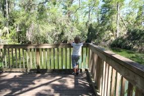 Watching wildlife in Everglades